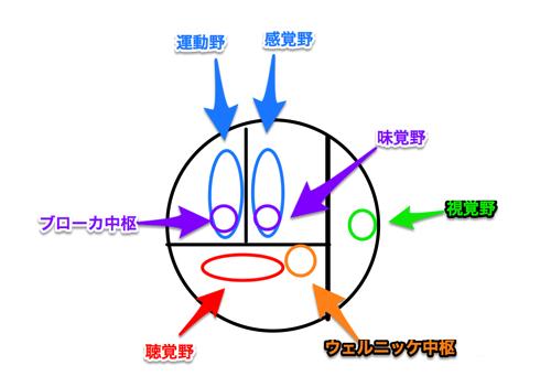 3分で覚える大脳機能局在の図