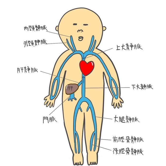 右心不全と左心不全の症状を分かりやすくイラストで説明