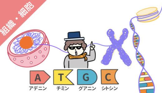 DNAの構造(リン酸・糖・塩基)