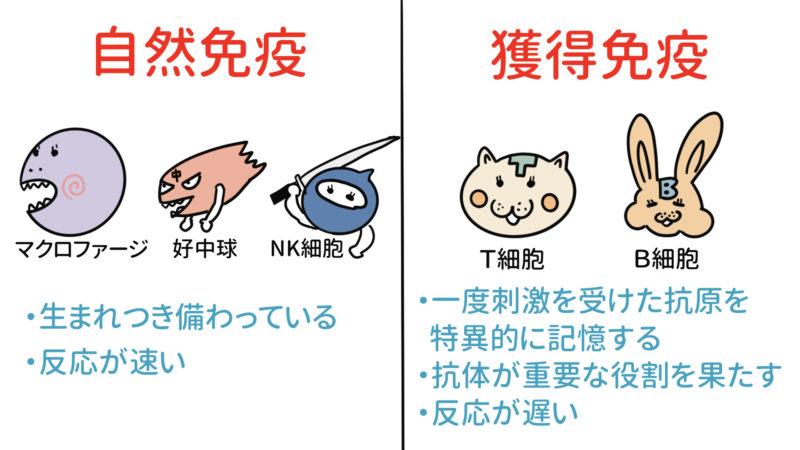 自然免疫と獲得免疫